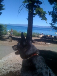 My Dog Dakota at Lake Tahoe