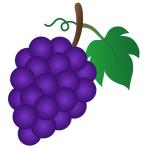 clip art purple grapes